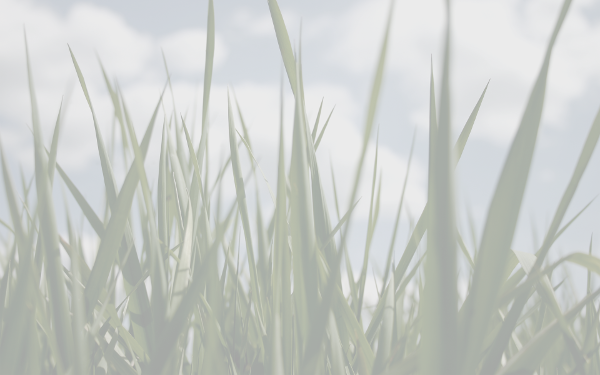 Grass (green) background